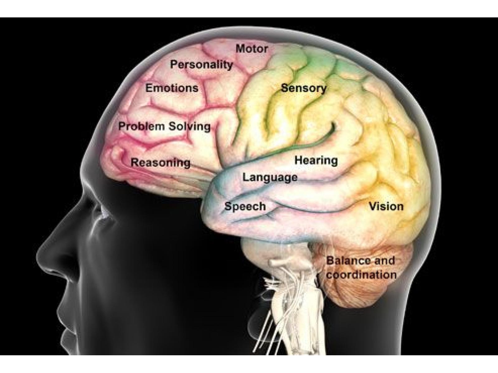 Cabinet Individual de Psihologie Mihaela Davidescu - princ_rm_photo_of_brain_function_map.jpg