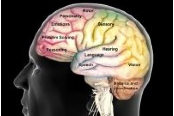Cabinet Individual de Psihologie Mihaela Davidescu - princ_rm_photo_of_brain_function_map.jpg
