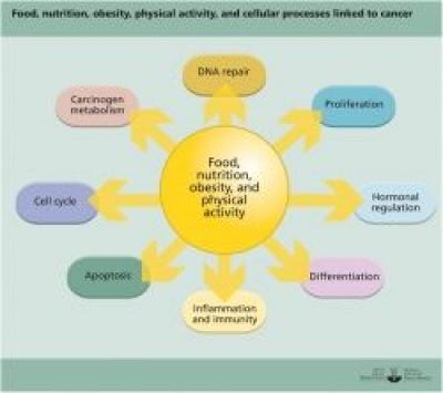 Suport nutritional in cancer