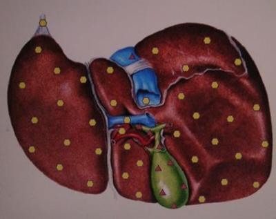 Ficatul si digestia –secretul echilibrului energetic,