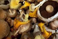 Beneficiile consumului de ciuperci pentru organism