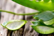 Proprietatile nestiute ale plantei aloe vera