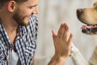 Beneficiile pentru sanatate ale animalelor de companie