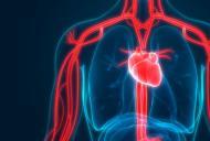 Arterele - ce rol au si cum sa le protejam?