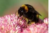 Prim ajutor in intepaturi de insecte