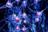 Celulele STEM – solutia de viitor a unor boli din prezent