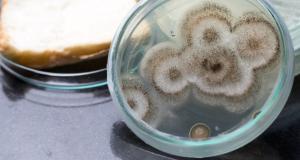 Care sunt efectele expunerii la mucegaiul negru?